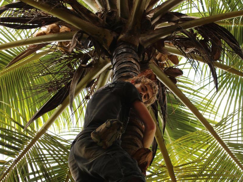 Palmbomen knuffelen