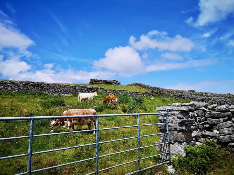 Ierland rondreizen