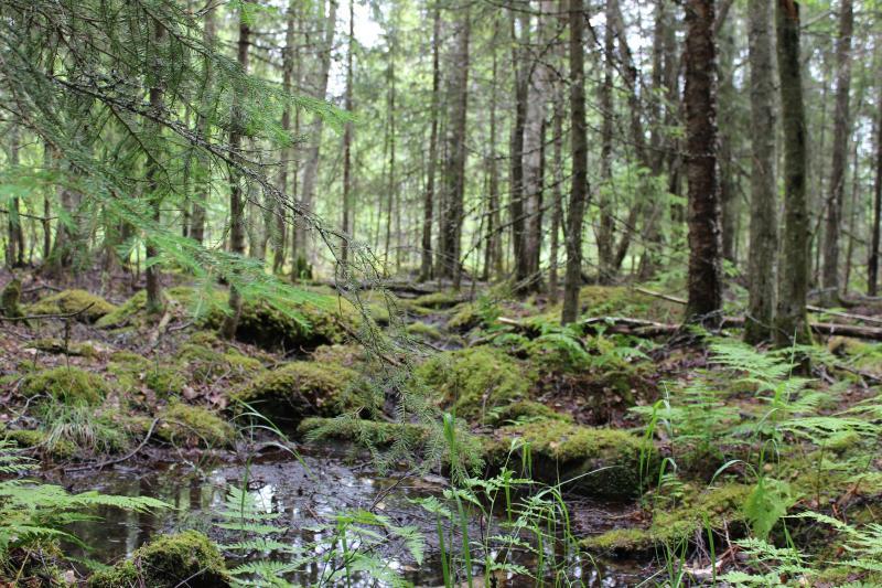Zweden natuurreis