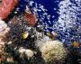 Aqaba snorkelen