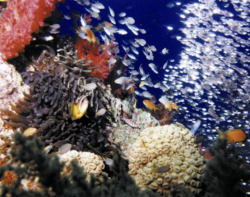 Aqaba underwater
