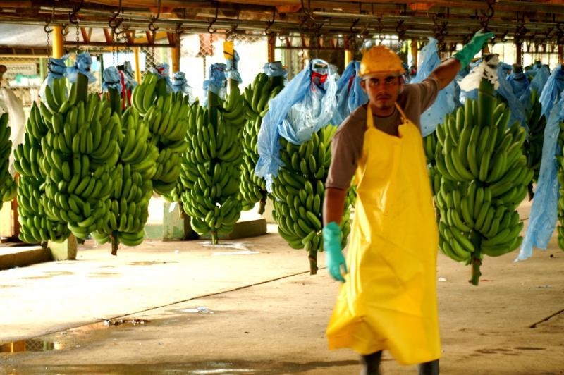 Bananenplukkers