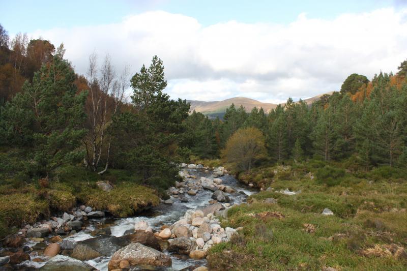 Cairngorms NP