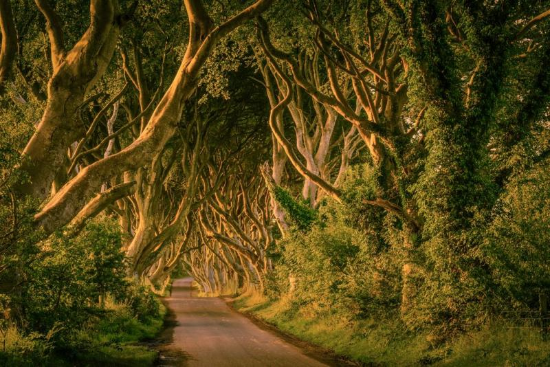 Dark Hedges Noord Ierland