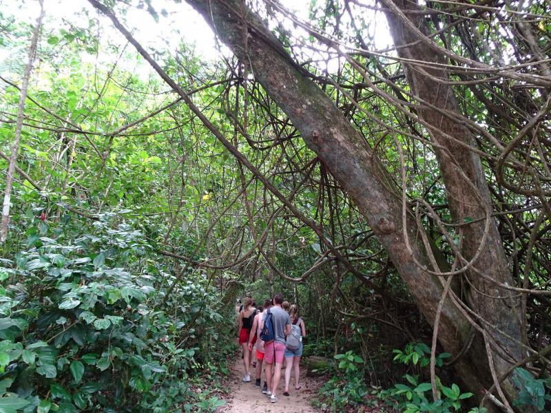 Hike tropisch regenwoud