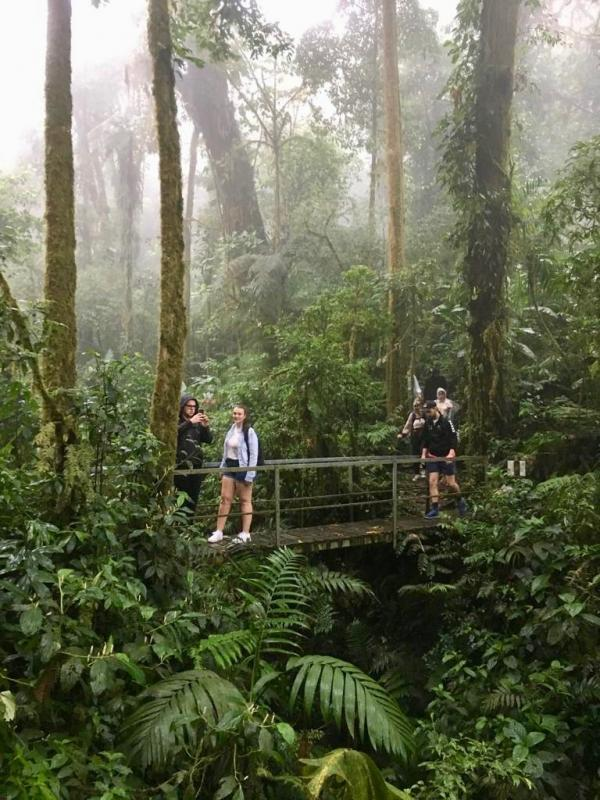 Hiken in tropisch regenwoud