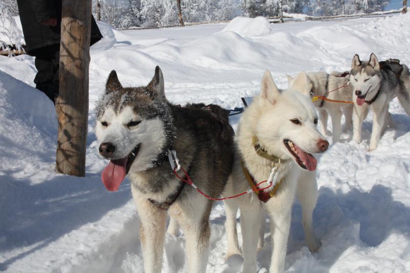 zweden wintergroepsvakantie