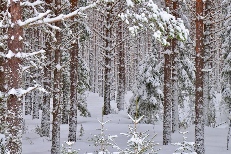 Zweden wintergroepsreizen