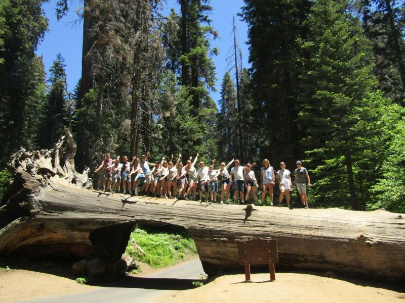 Tunnel Log in Sequoia