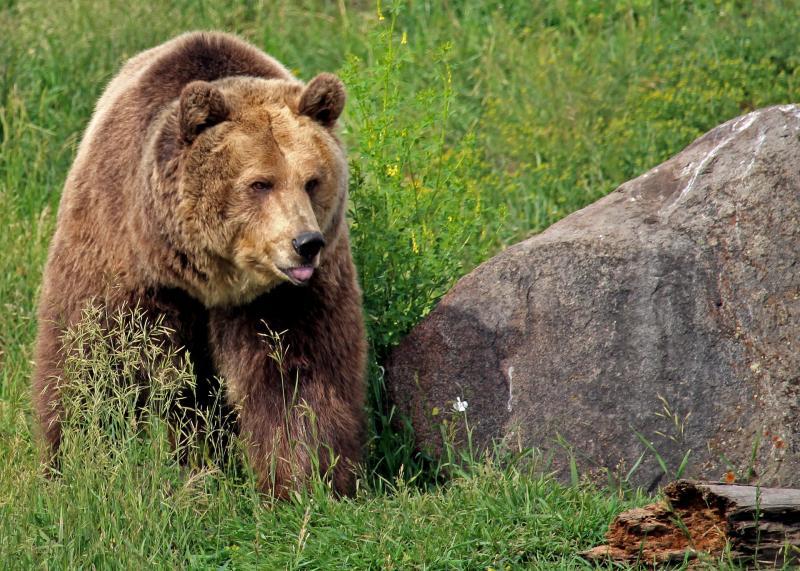 Wie weet wel beren spotten?