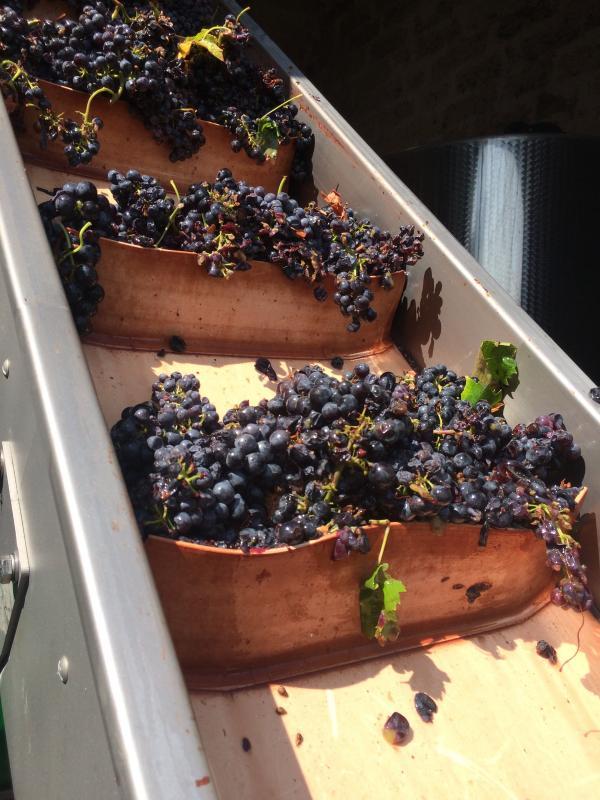 Wijn zuid italie