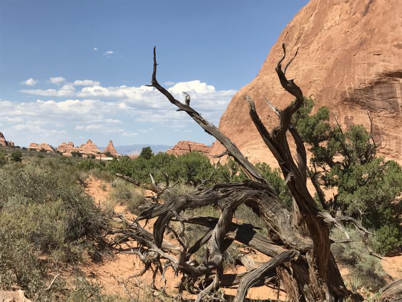 Woestijn USA reizen