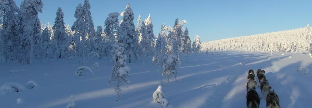 Ultieme sledehondentocht Lapland