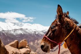 Groepsreis Marokko Zomer