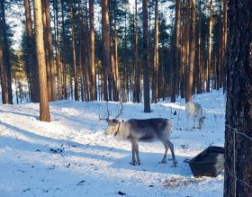 Lapland groepsreis