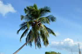 Singlereis Malediven