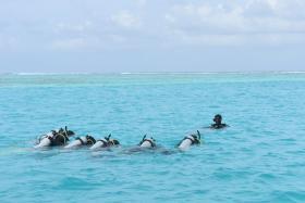 Singlereizen Malediven