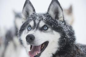 Winterreis Lapland Zweden